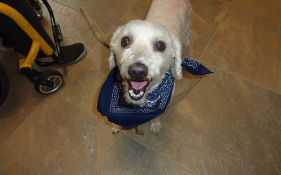A medium sized beige dog named Shaggy wearing a blue kerchief and smiling at the camera