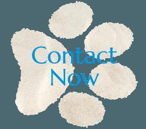 Contact Compassionate Vet