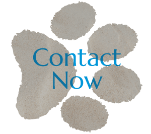 Contact San Diego Veterinarian