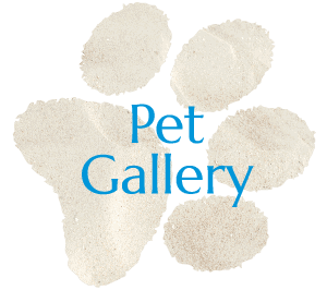 San Diego Pet Gallery