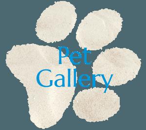 San Diego Pet Gallery