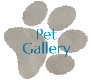 Pet Gallery - Coastview Animal Hospital