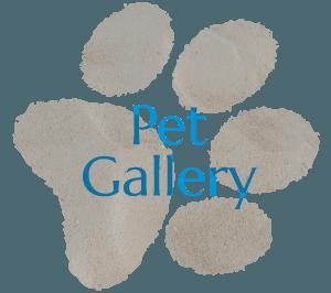 Pet Gallery - Coastview Animal Hospital