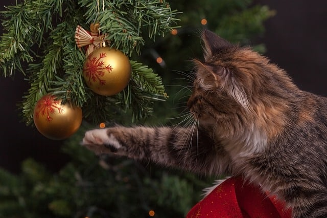 Keep pets away from holiday decor